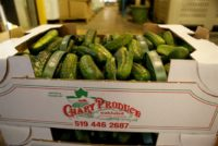 4x3 cucumbers.JPG