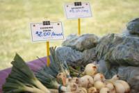 Port Rowans Farmer Market_6.jpg