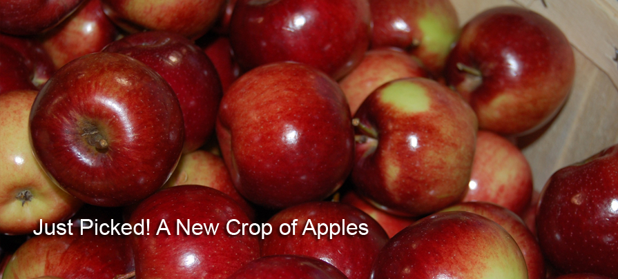 A New Crop of Apples