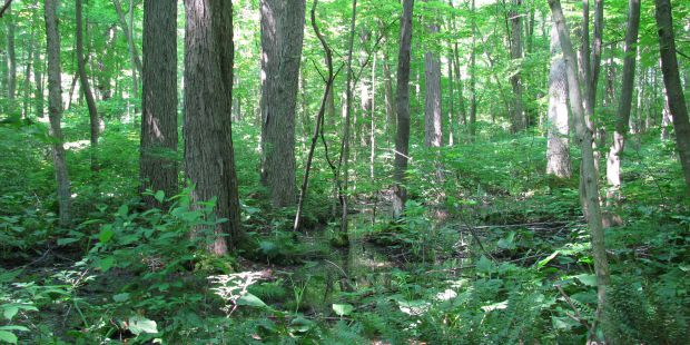 Dense, lush green forest.