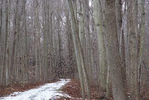 Backus Woods in Winter