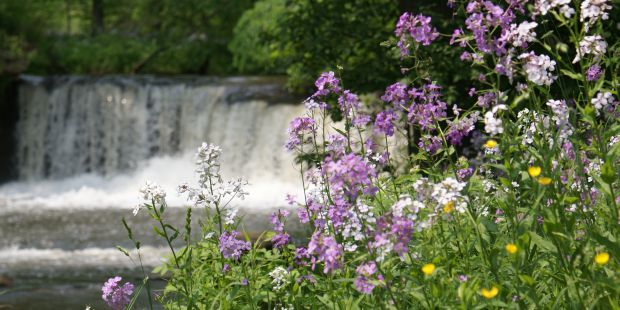 Purple white and yellow flowers. Waterfall in the background.