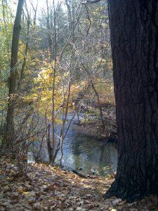 Brook Conservation Area stream