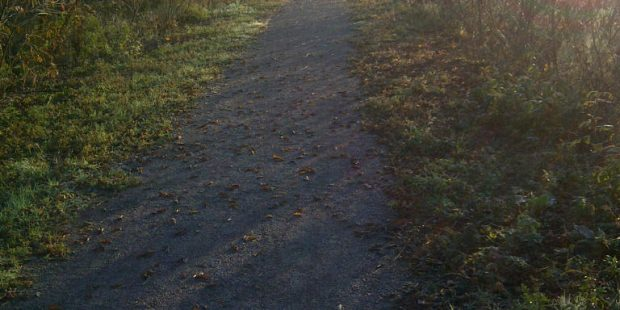 Gravel path lined with bushes at sunrise.