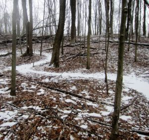 Long Point Eco-Adventures and Burning Kiln Winery Trail in winter
