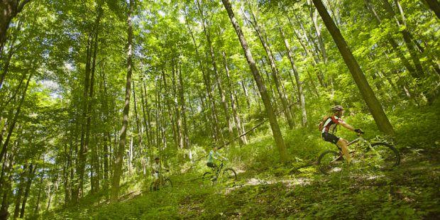 Watching bikers ride through a dense green forest in summer.