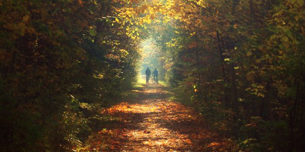 Densely lined trail covered in leaves and autumn colours.