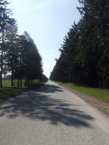 Looking down the middle of a country road lined with large trees.