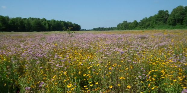 Yellow and purple flowers in an open meadow.