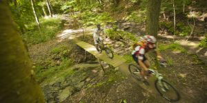 Two people biking through the forest at a fast pace