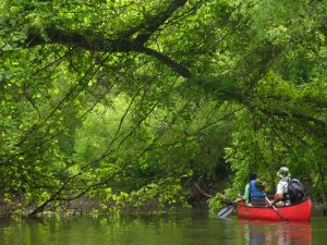 Lush green forest with tree over-hanging a canoe on the stream.