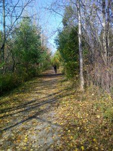 Lynn Valley Trail