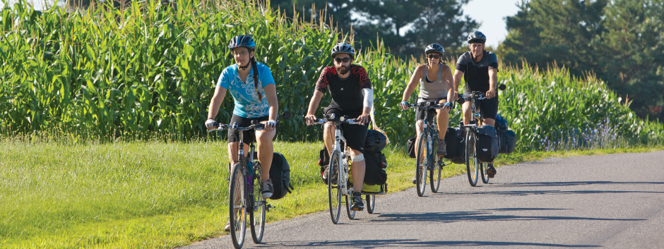Four Cyclists on the road with corn field behind them.