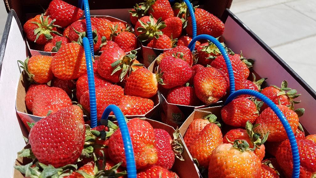 Strawberries Cider Keg Norfolk County